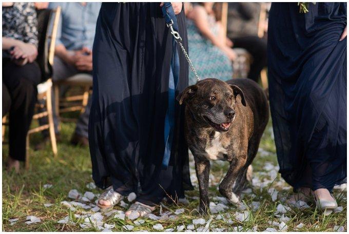 Navy Blue and Pink October Backyard North Carolina Wedding Virginia Wedding Photographers_7027