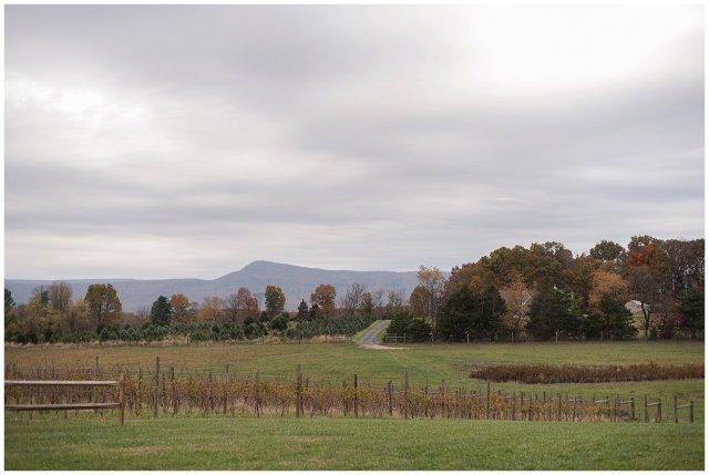 Navy Blue Blue Ridge Mountain Wedding Faithbrooke Farm Vineyard Luray Virginia Wedding Photographers_7118